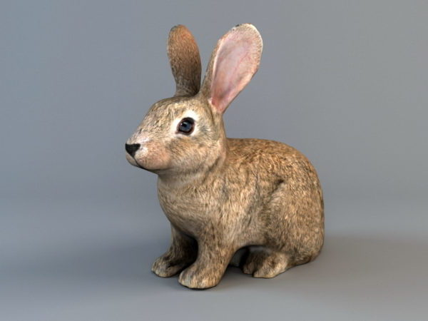 Kahverengi Tavşan