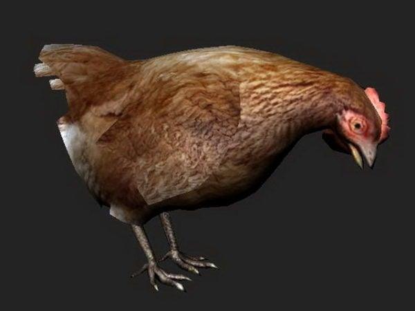 Carácter de gallina marrón