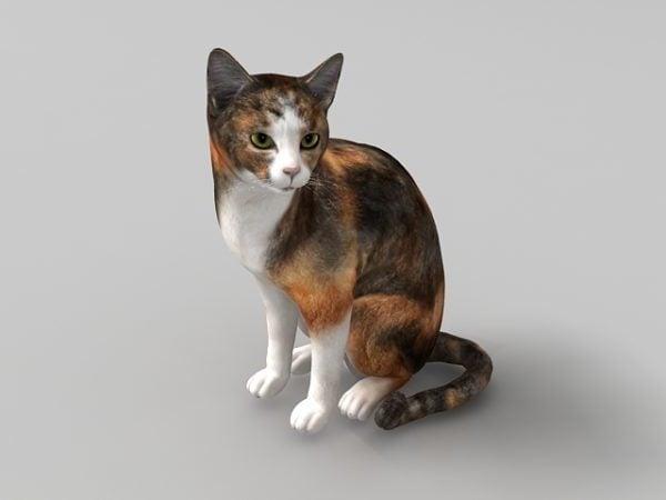 Calico Cat Animal