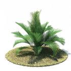 Chamaedorea Cataractum Tree