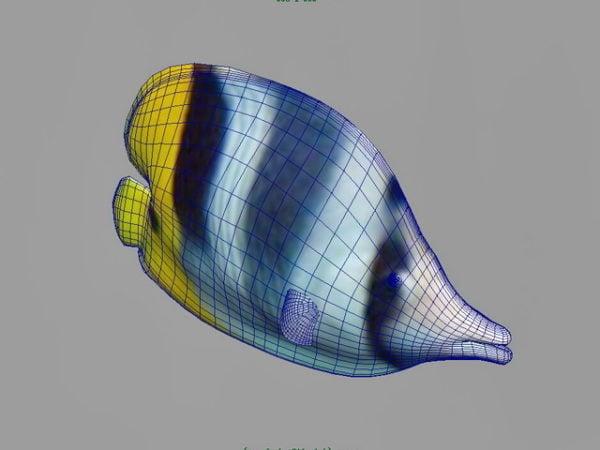 Värikäs trooppinen kala