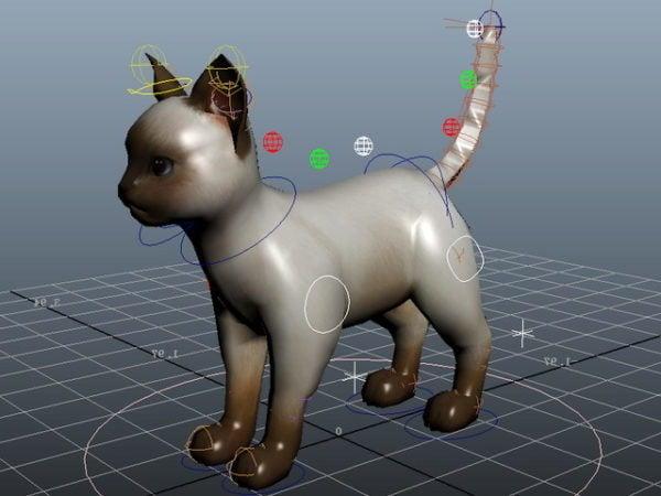 Domestic Cat Rig