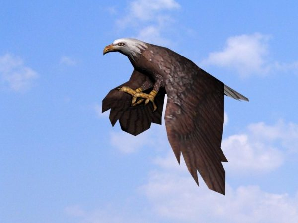 Animación de deslizamiento de águila