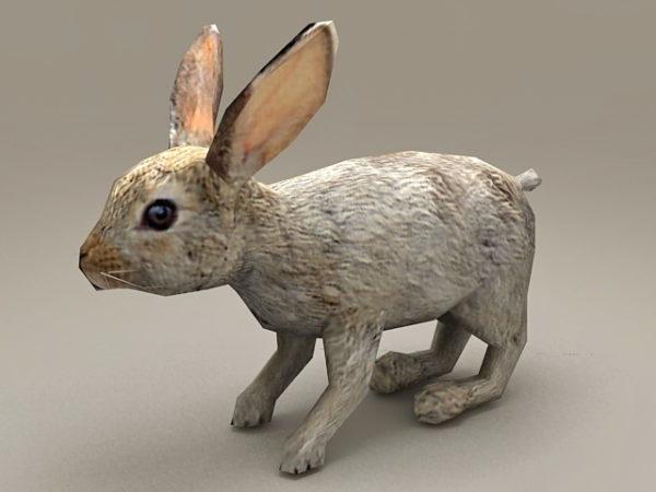 Conejo occidental Low Poly