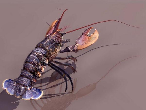 Animal European Lobster
