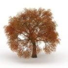 أوراق الخريف شجرة الخريف