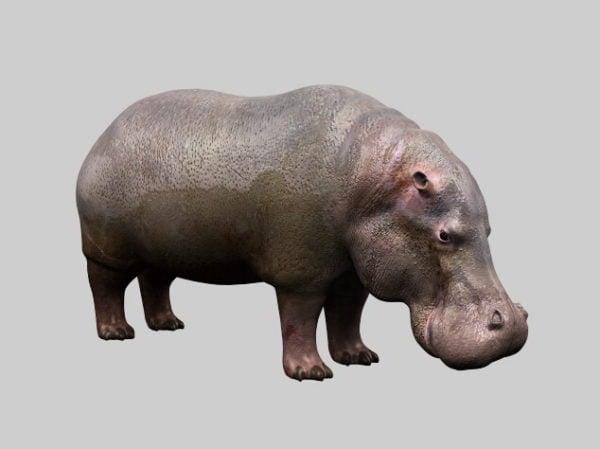 Hipopótamo gordo
