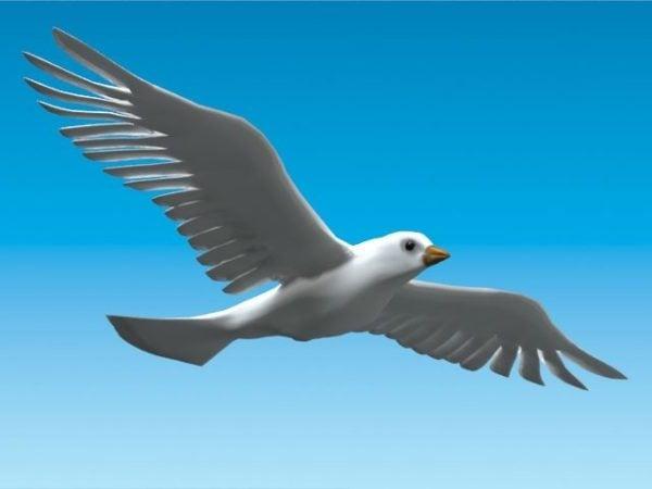 Flying Dove Bird