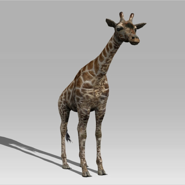 Giraffe Animal Rigged