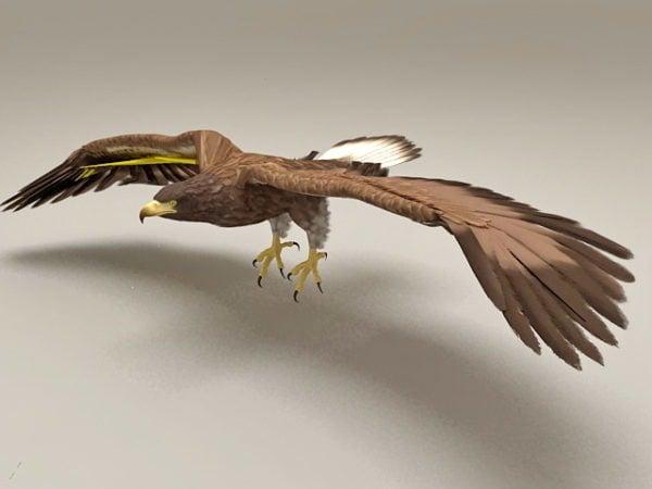 Azor volador Rigged Y animado