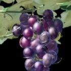Grape Vine With Fruit