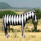 Otlak Zebra Hayvanı