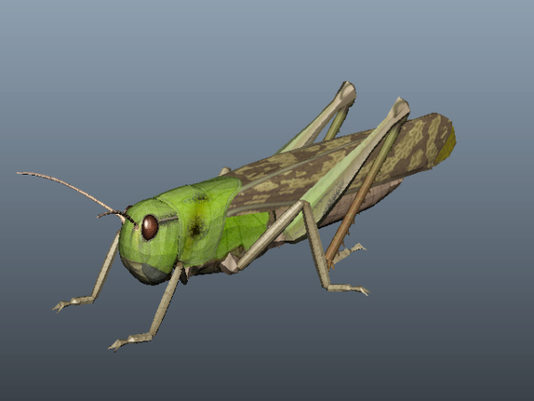 Animal Green Locust