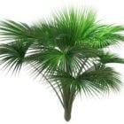 Indischer Ozean Fan Palme