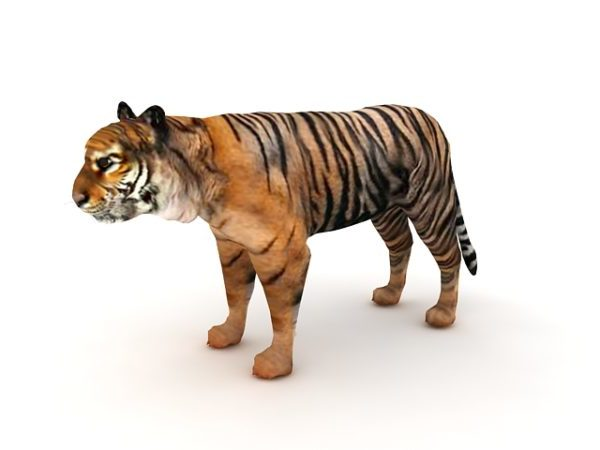 Indian Tiger Animal