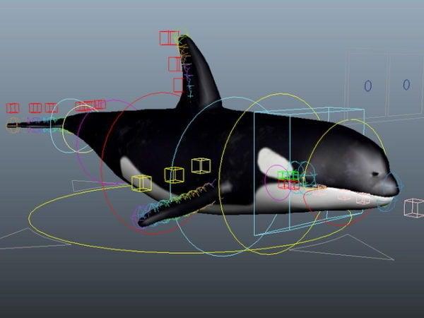 تلاعب الحوت القاتل