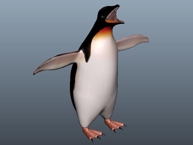 King Penguin Animal