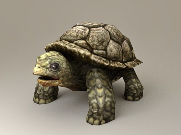 حيوان كبير السلاحف البحرية
