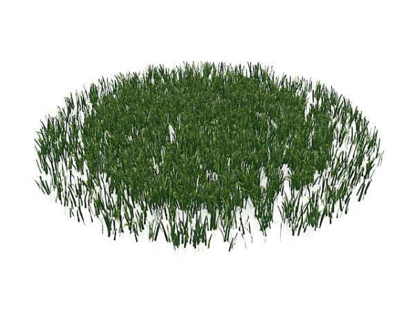 Lawn Grasses Plant