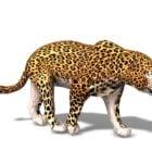 Afrika Vahşi Leopar Hayvanı