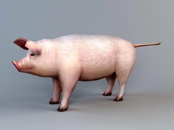 Cerdo doméstico de baja poli
