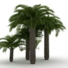 Mediterrane Fächerpalmen