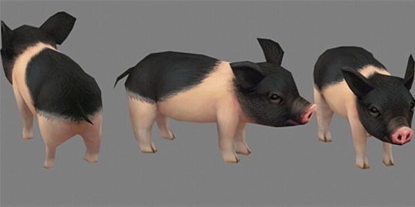 Cerdo en miniatura