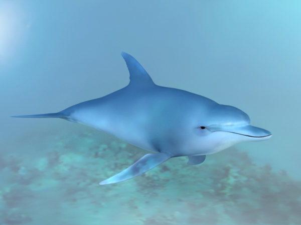 Ocean delfiini