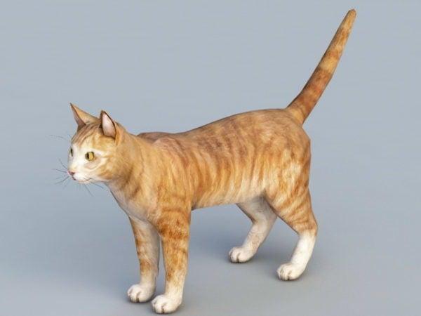قطة برتقالية