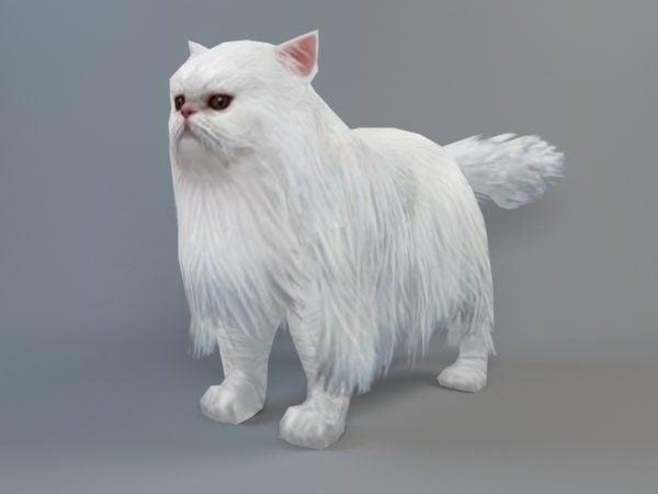 قط فارسي