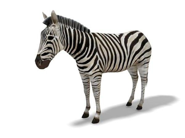 Plains Zebra Animal