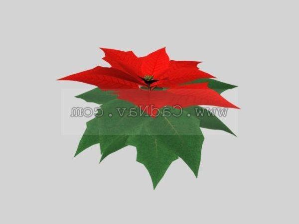Poinsettia Plant Free 3d Model 3ds Max Vray Open3dmodel 123741