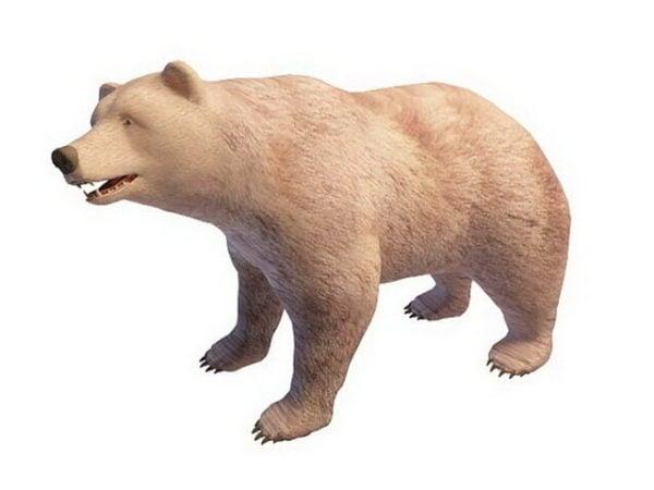 Russian Polar Bear Animal