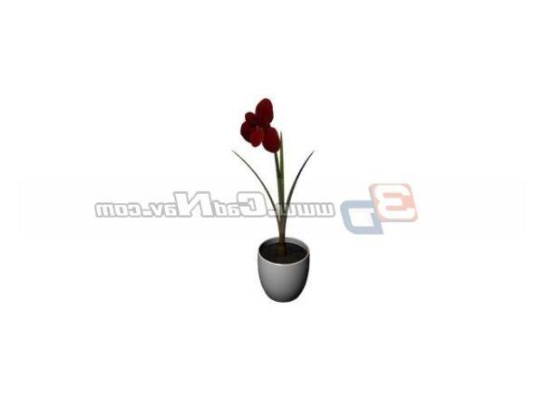 Potted Flower Miniascape Plant