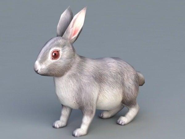 Conejo animal