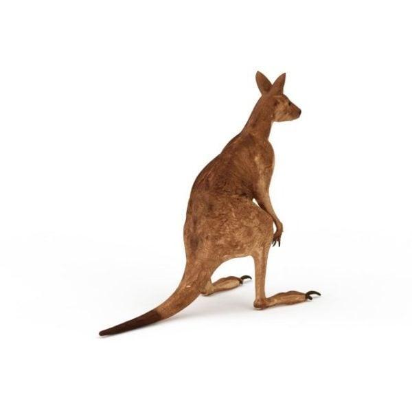 Australialainen punainen kenguru-eläin