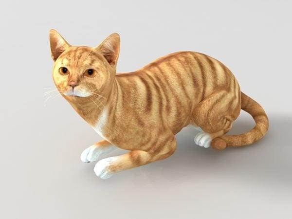 أحمر العتابي القط الحيوان