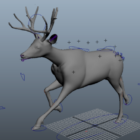 Deer Rig Koşu