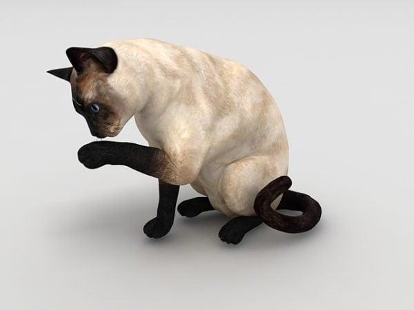 سيامي القط الحيوان