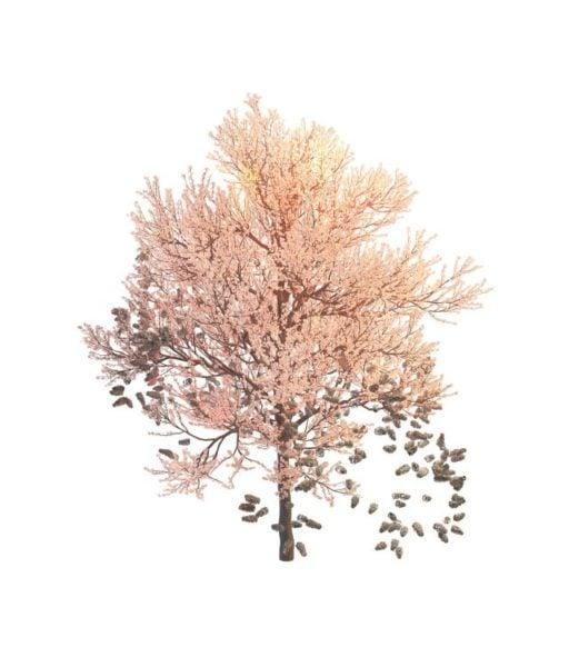 Kevät vaaleanpunainen puu