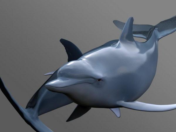 Uinti delfiini