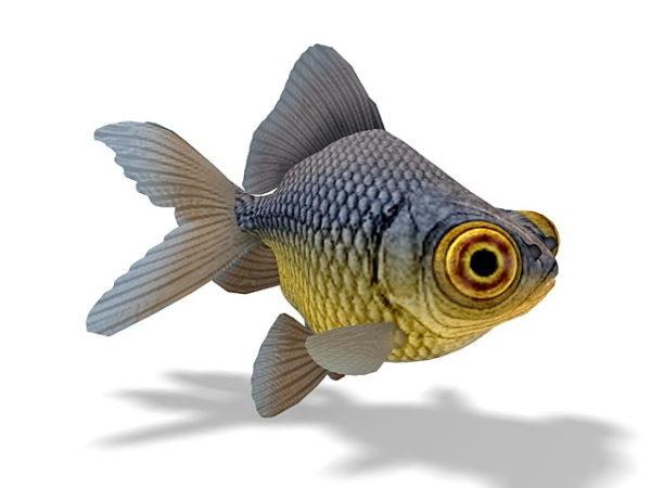 Teleskooppisilmäinen kultakalaeläin