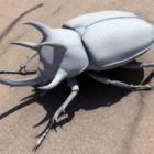 Three Horned Rhinoceros Beetle