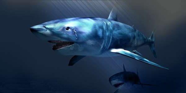 نمر القرش
