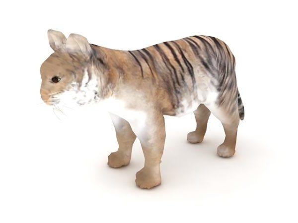 Tiger Cub Animal