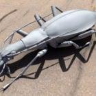 Weevil Beetle