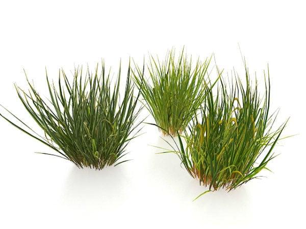 Winter Grasses Free 3d Model Max Vray Open3dmodel 118140