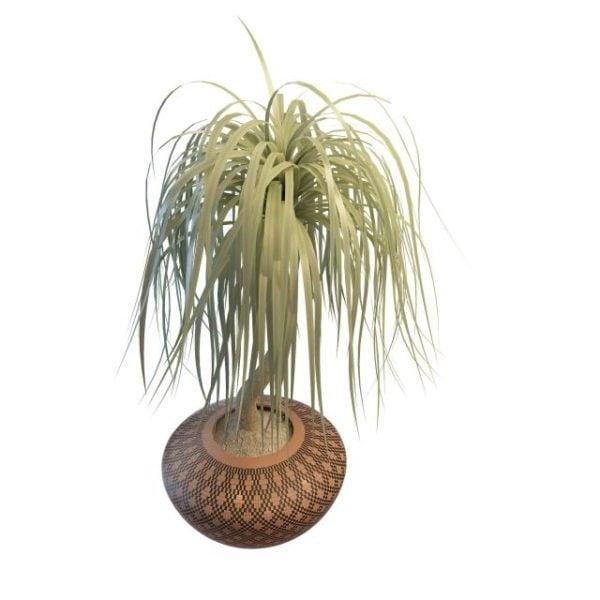 Toimisto Bonsai-puu