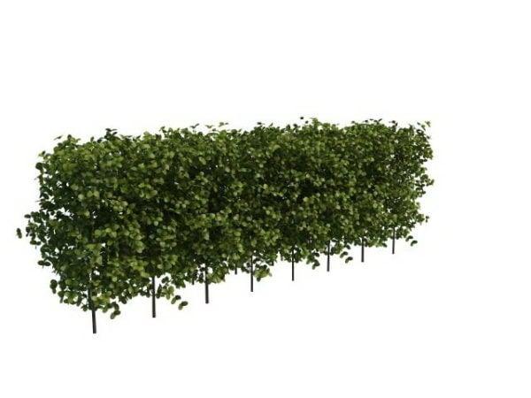 Garden Boxwood Hedge Plants