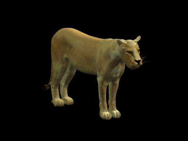 Leona Africana Animal